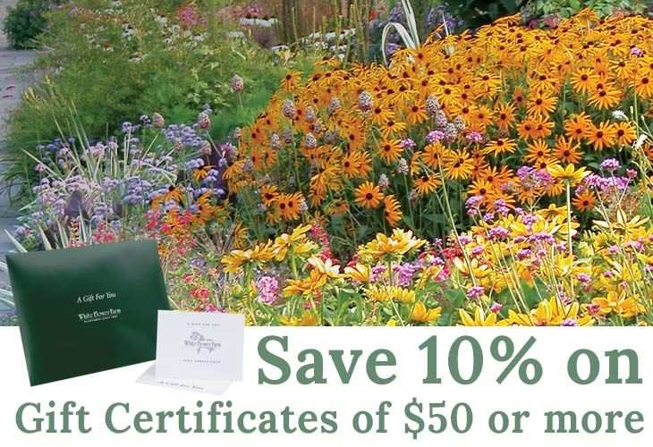 Garden specials flower coupon white flower farm save 10 on gift certificates mightylinksfo