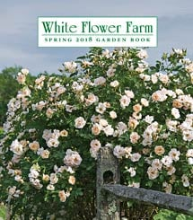 Pink bicolor rose bouquet 12 stems white flower farm get a free white flower farm catalog mightylinksfo