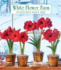 White flower farm get a free white flower farm catalog mightylinksfo