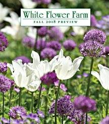 Blue dots motif pots white flower farm get a free white flower farm catalog mightylinksfo