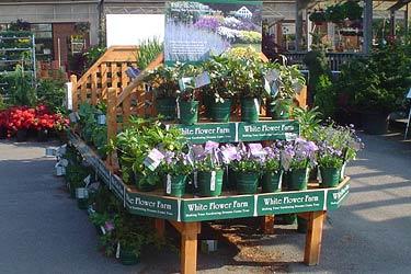 Garden center partners white flower farm for Idea center dilshad garden